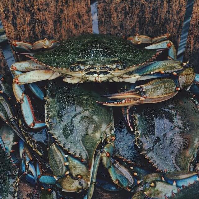 Bucket of Black Crabs